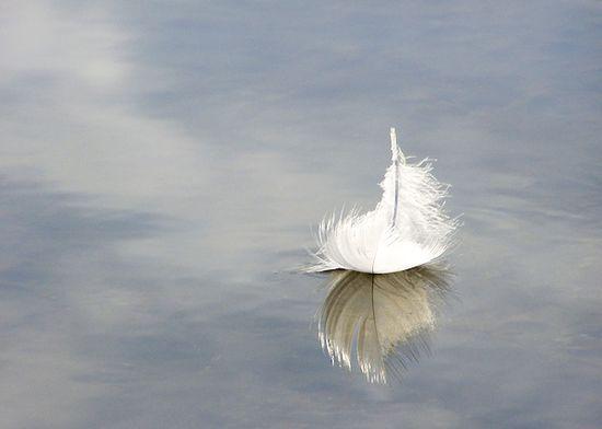 Fotografía de una pluma sobre la superficie del agua