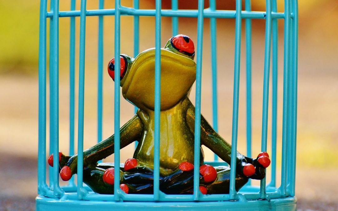 ¿Sufres el síntoma de la rana hervida?